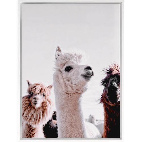 Llamas On Parade Canvas Wall Art Temple Amp Webster