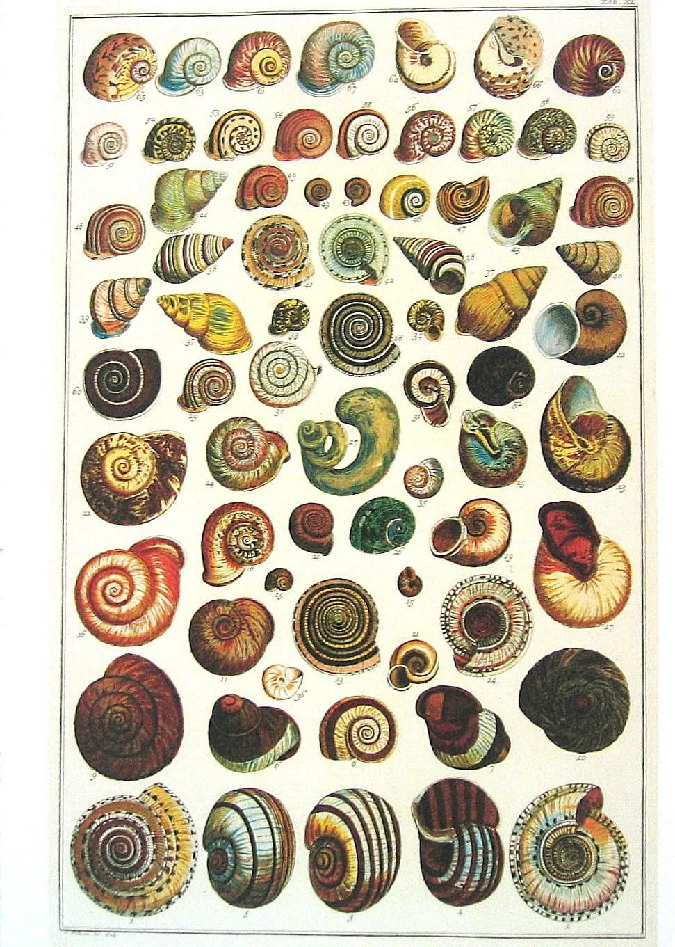 Ss Albertus Seba Book Print Cabinet Of Natural Curiosities