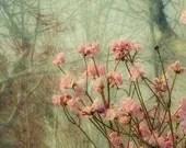 Azalea  Photograph, Floral Art Print, Shabby Chic Home Decor,  Flower Wall Decor - JudyStalus