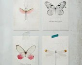 Insect Study Postcard Set - f2images