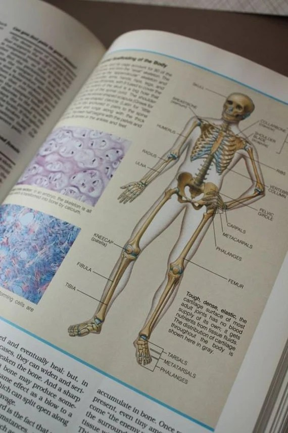 Medical Anatomy Book ABC's of the Human Body