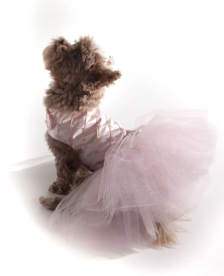 Ballerina Dog Dress