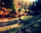 Photography,art,nature photo,spring shadows in the woods,home deco,great gift under 10 usd - picsoflive