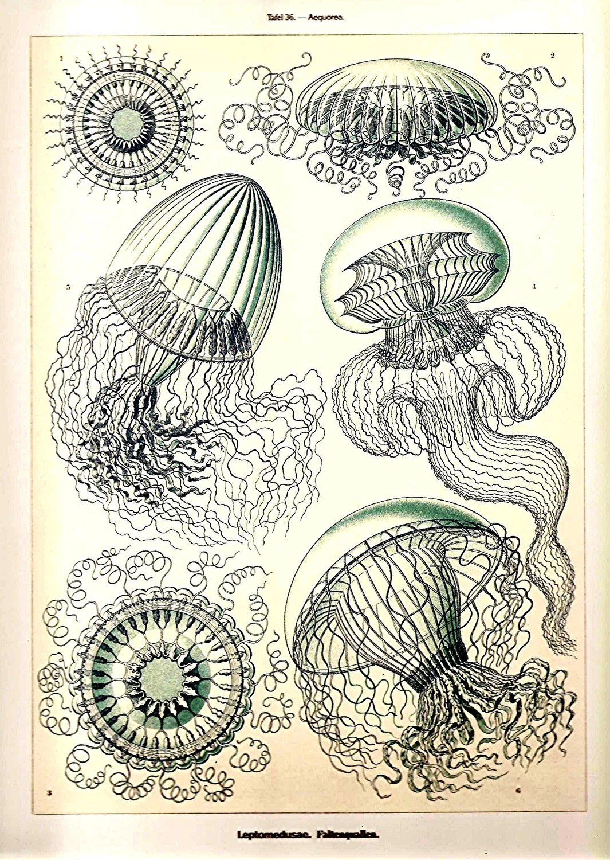 My Jellyfish By Varnai Krisztina At Dublin Ink Ireland