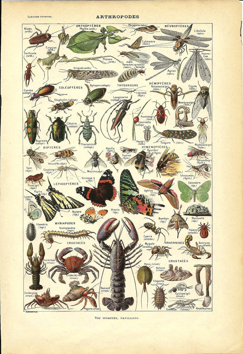 Vintage Animal Poster ARTHROPOD French Dictionary Color