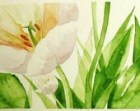 White Tulip Bloom, fresh green leaves, watercolor spring art print