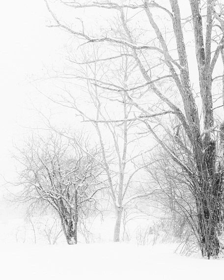 Winter Landscape Snowy Trees Lace Minimal Rustic White Gray Grey Snow Winter Photograph Black and White, 8 x 10 Fine Art Print - ShadetreePhotography