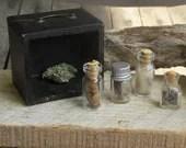 Forest Specimens No. 1 Miniature Antique wood curio box diorama. Tiny Bottles of Wolf Fur, Hemlock Pine cones, lavender buds, Fox claws