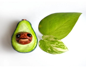 Avocado Vegetable Magnet, Food, Refridgerator, cute - Seriouslysillygirls
