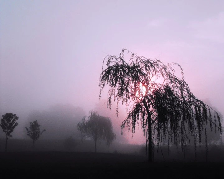 Weeping Willow Tree nature scene surreal Ohio landscape sunrise photography silhouetted trees blush pink dawn fog 10 x 8 print