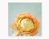 Spring Flower photo, peach yellow ranunculus flower print, peach and blue nature print, cottage chic decor, spring decor, home decor - semisweetstudios