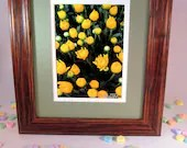 Ever Lasting Flowers Yellow in New Medium Brown Frame 12 1/2 x10 1/2 - MuttiArtography