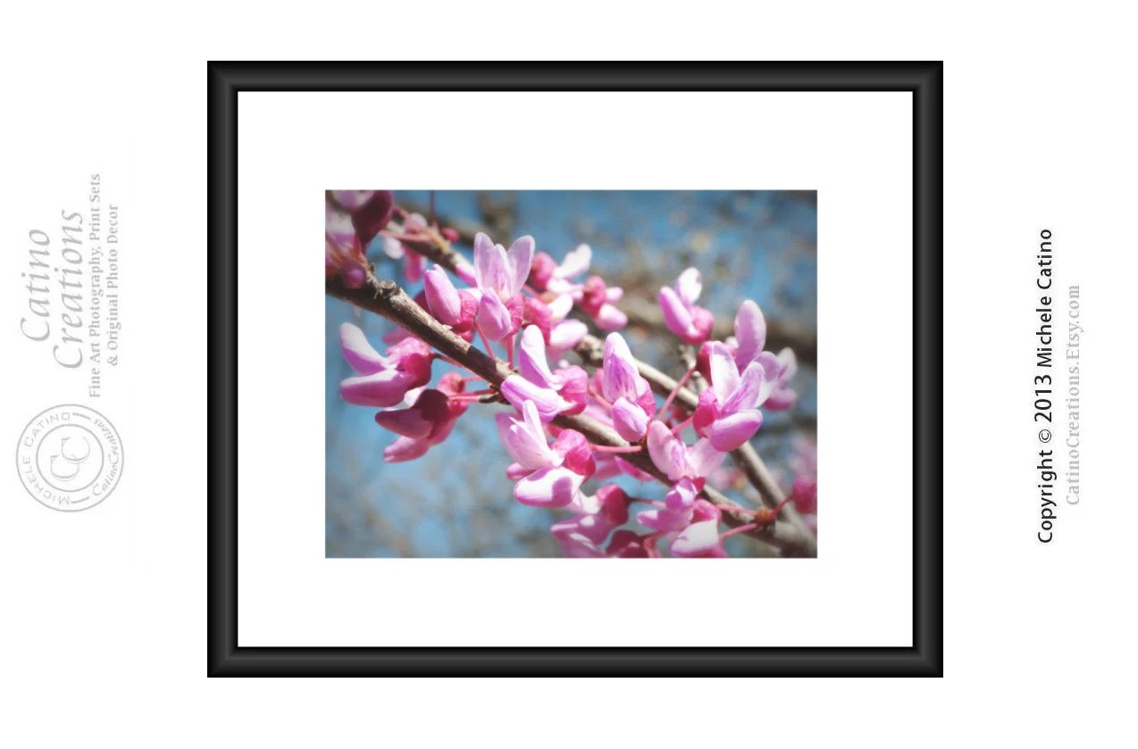 Pink Blossoms Red Bud Tree Blossom Spring Flower Native Texas Flower 8x10 signed photo art - CatinoCreations