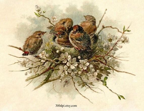 Nest Digital Scan Vintage Postcard Printable Download Birds