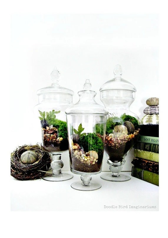 SALE Garden Terrarium Set: Miniature Moss Garden in Decorative Apothecary Jars Wedding Table Centerpiece - DoodleBirdie