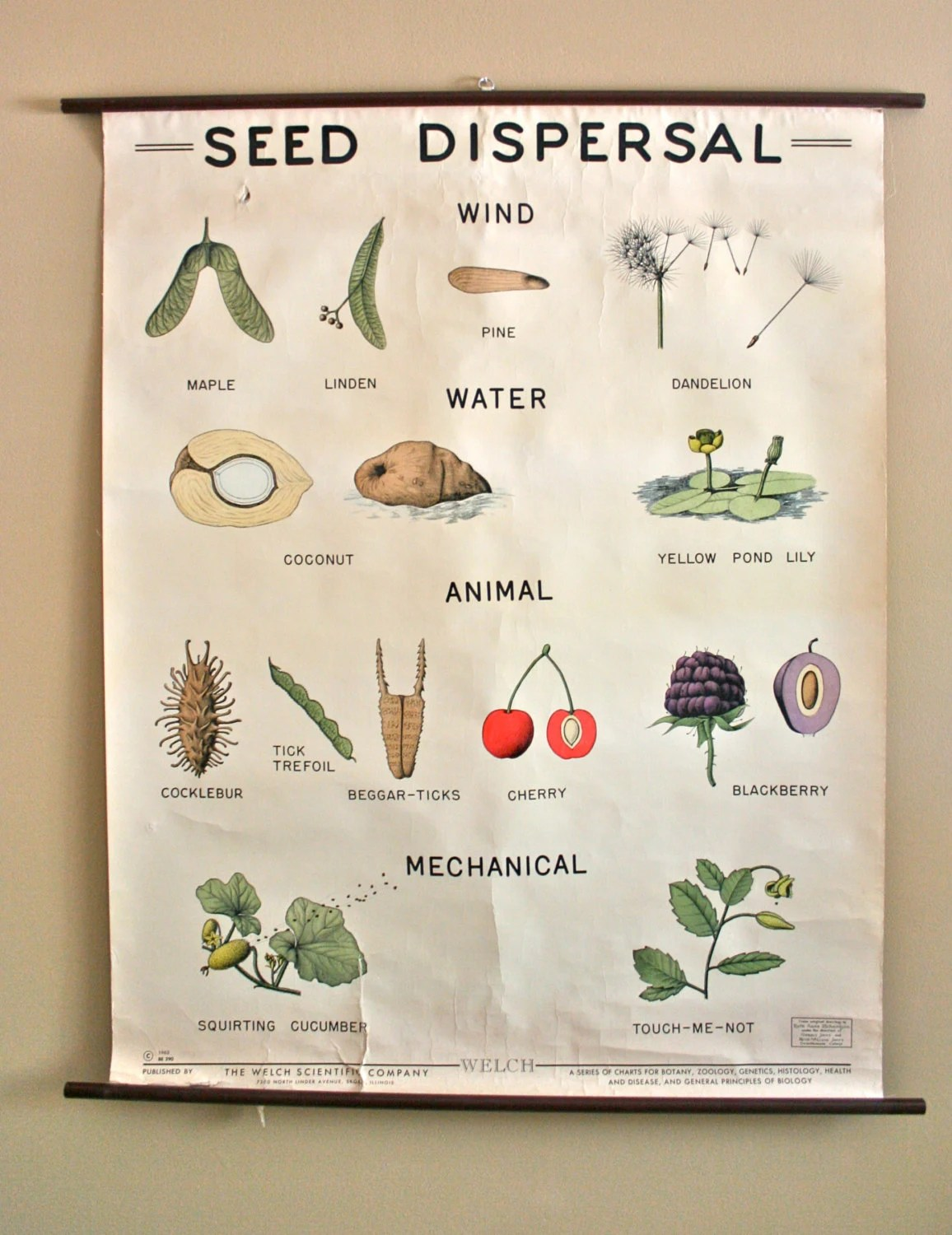 Vintage S Biology Pull Down School Chart Seed Dispersal