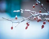 LAST WEEK 50% off End of Winter Liquidation Sale - Winter Berries - Fine Art Photography Instant Digital Download Frozen Nature - PatrickRabbatPhotos