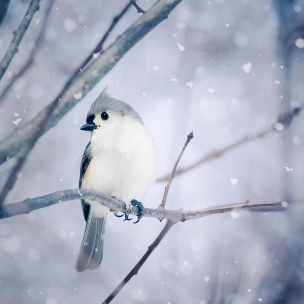 Winter Wall Art Winter Photo Winter Art Bird By