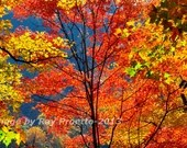 Tree Top, Autumn Colors, ...