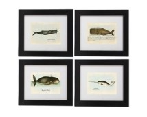 Set of 4 Whale Prints - Nautical Art Posters - Whale Art - Digital Illustrations From Vintage Prints - Wall Hangings -