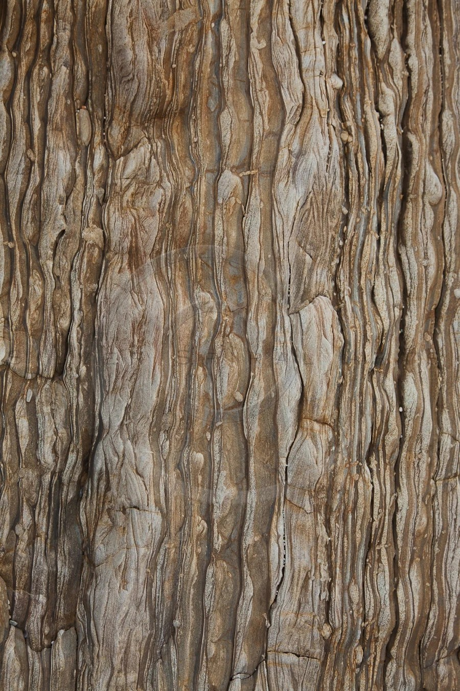 Birch Bark Wrapping Paper