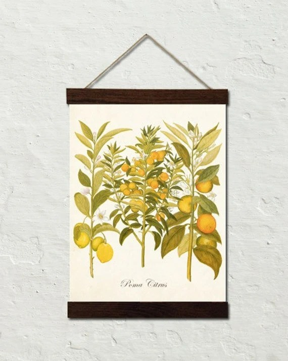 Vintage Citrus No.23 Botanical Art Canvas Wall Hanging - Cottage Home Decor - Multiple Sizes Starting at USD 50.00+
