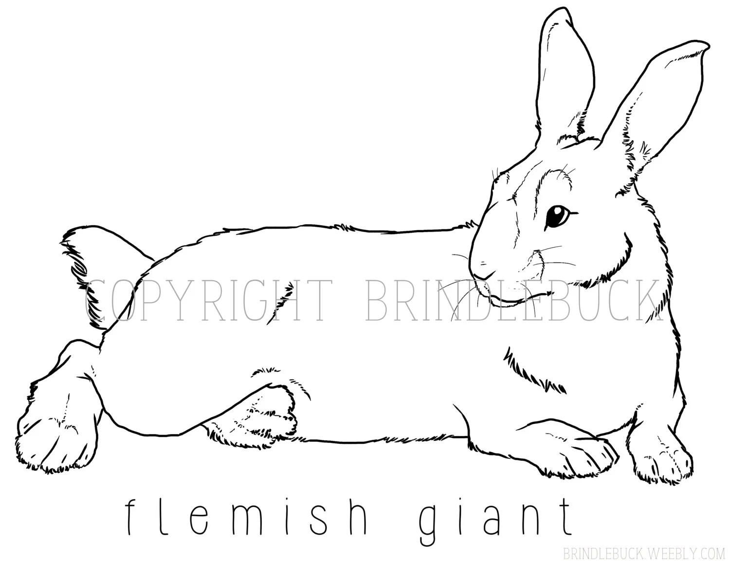 Flemish Giant Rabbit Coloring Page Downlaod Bunny By