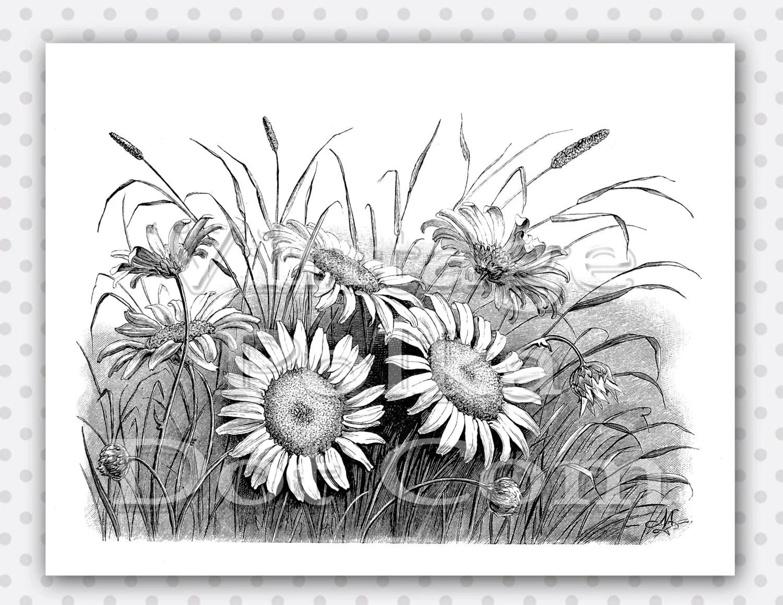 Vintage Daisy Clip Art Graphic Clipart Victorian Garden Lovely