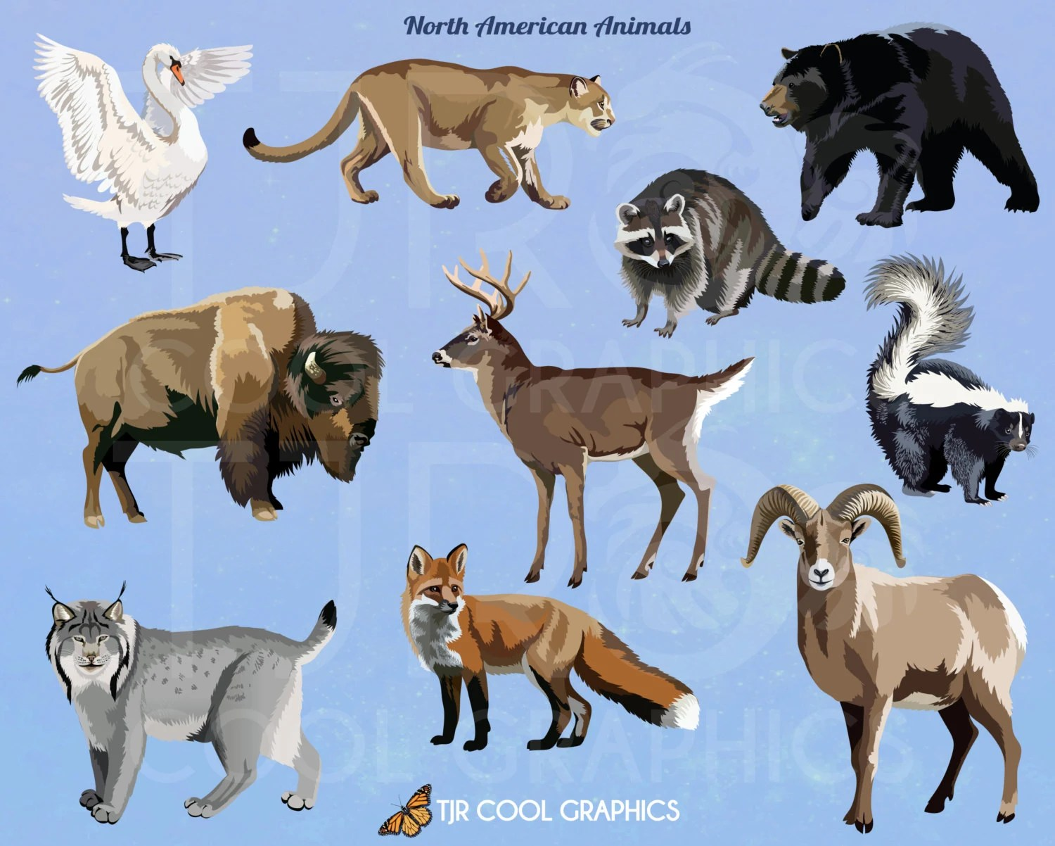 North American Animals Digital Realistic Clip Art