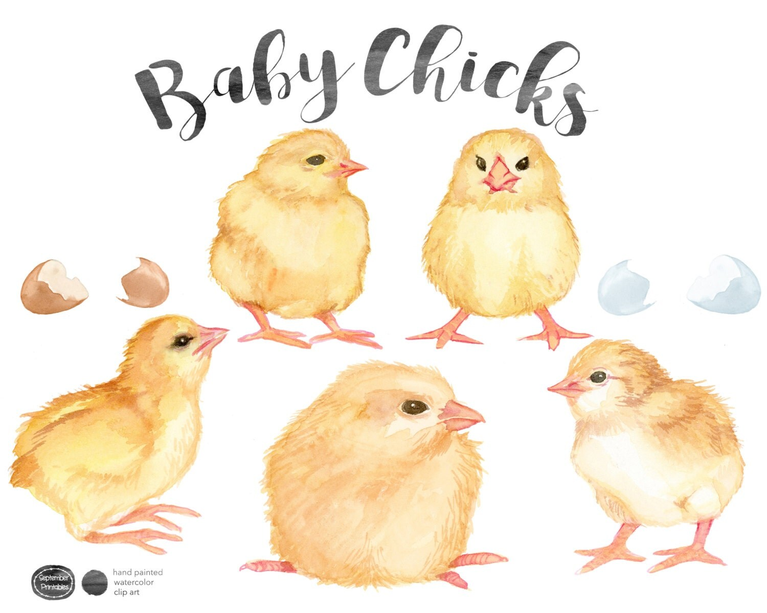 Watercolor Baby Chicks Baby Chick Clip Art Nature Clipart Stock Image Cute Animals Baby