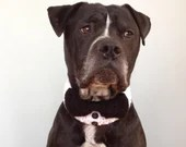 Black Dog Bow Tie, Bow Ti...