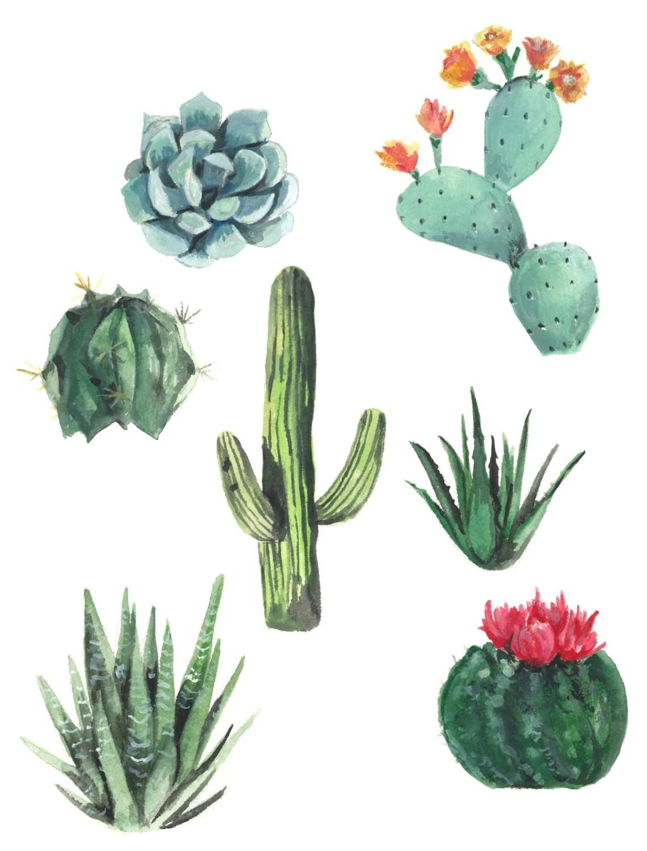 Succulents Watercolor Print Succulent Watercolor Painting
