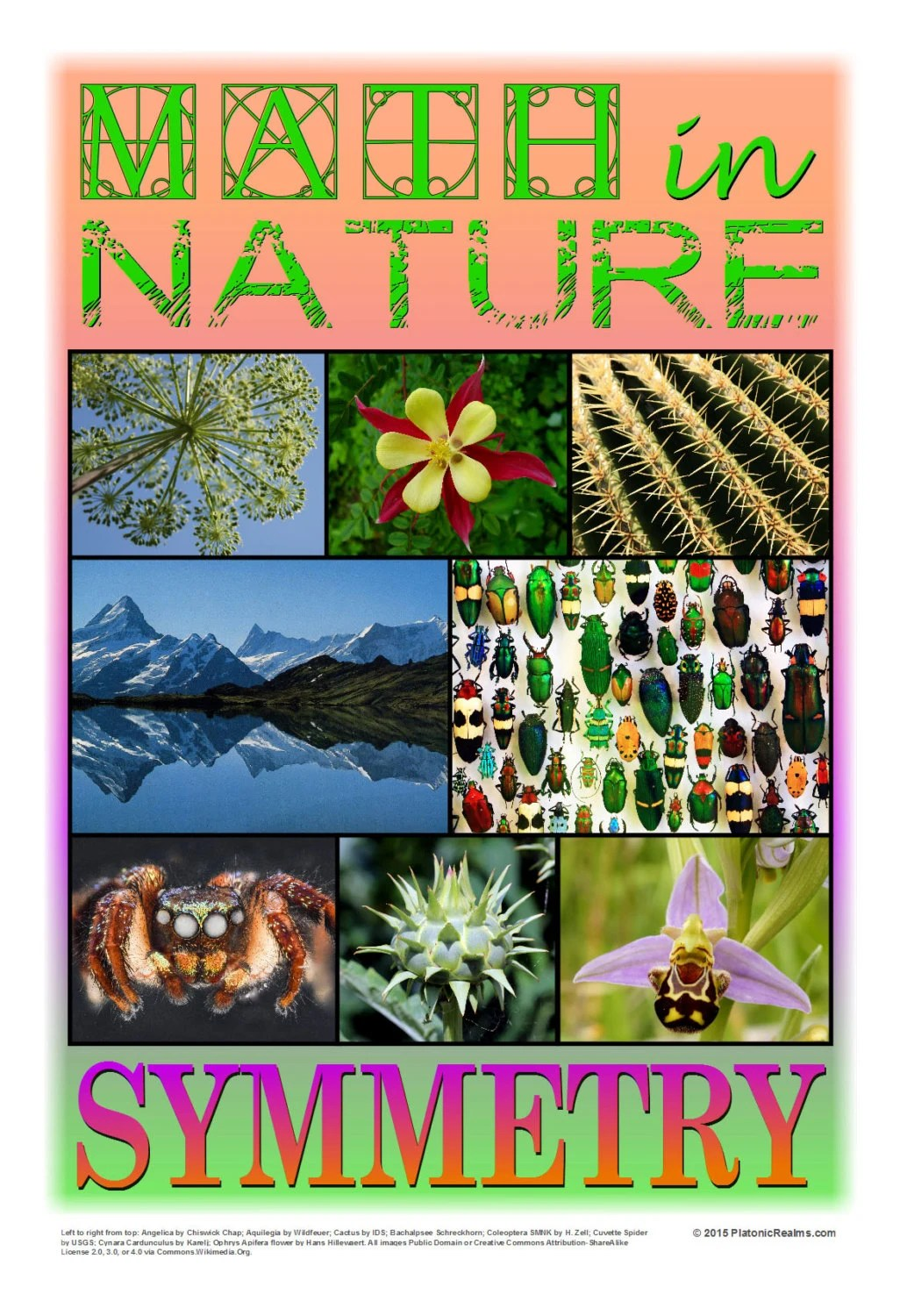Math In Nature Symmetry By Platonicrealms On Etsy