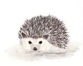 Hedgehog - Print. Paintin...