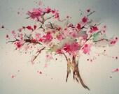 Cherry ORIGINAL watercolo...