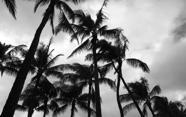 Paradise II Tropical Black White Palm Leaves Photography