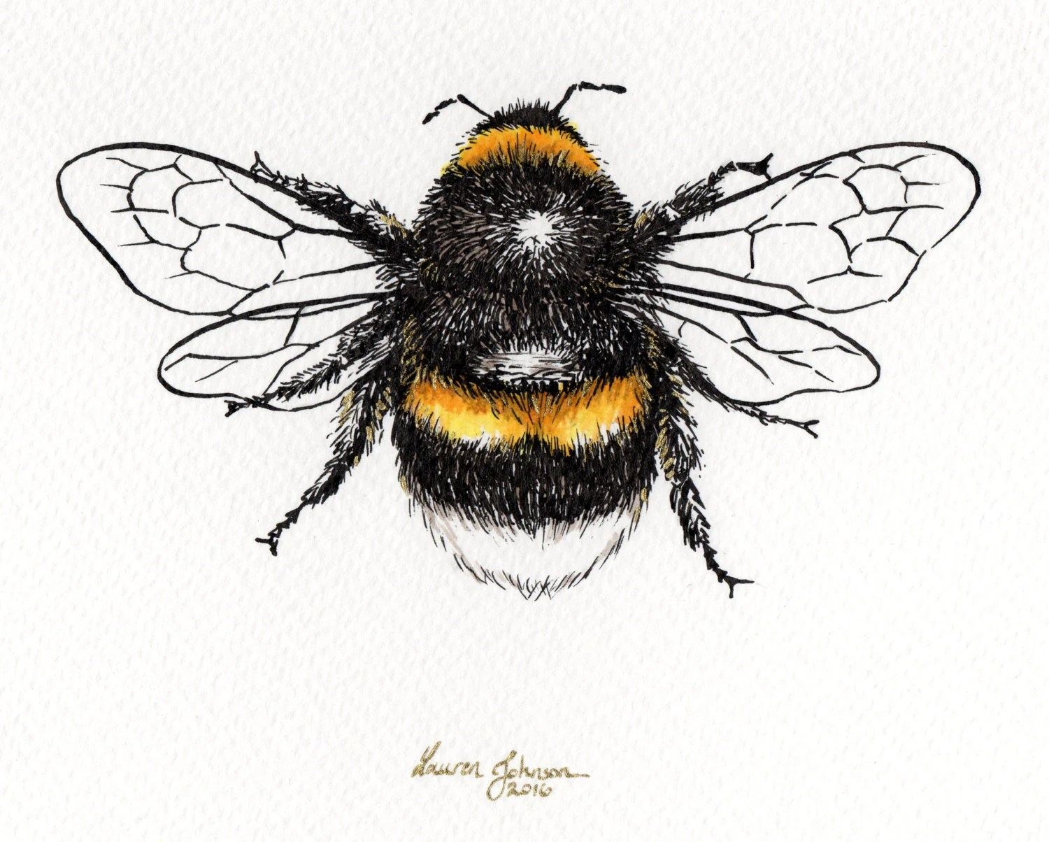Queen Bee Pen And Ink Wall Art Bees Cute Summer Drawing