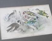 Antique lithograph bird p...