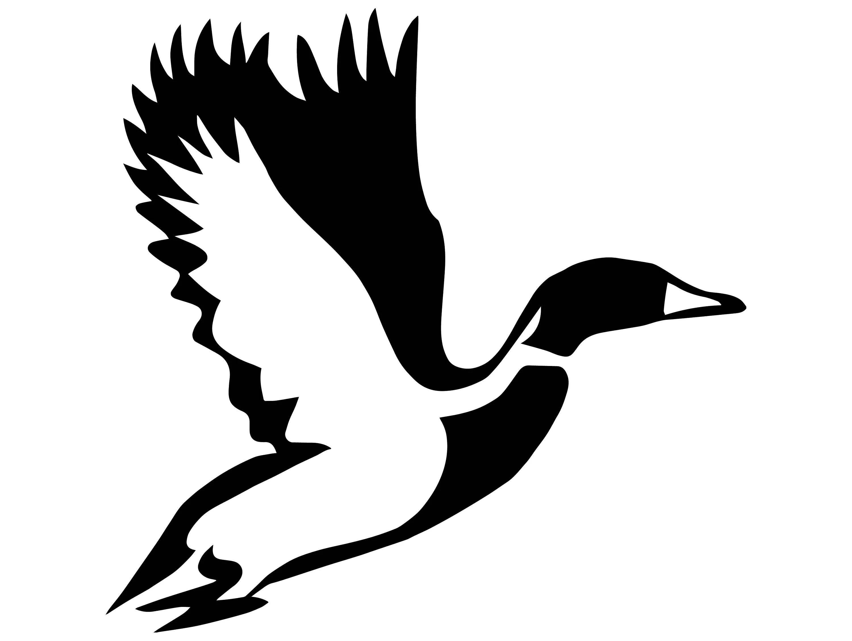 Duck Animal Nature Goose Flight Bird Hunting Ducky Duckling