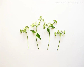 Botanic Collection No.3 -  8'x10' Fine Art Photograph - Composition I - Little Meadow