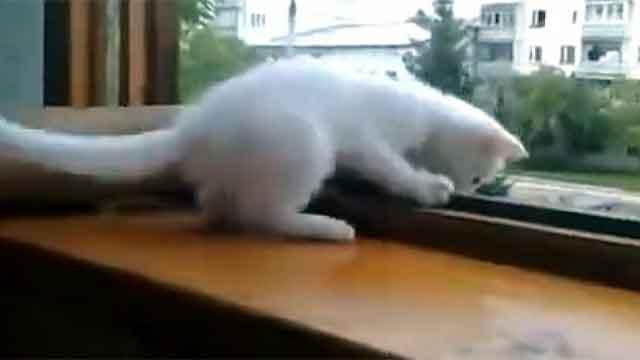 Кот, милый, котенок, русский, советский, Владимир, Путин, медведь, Россия, холодный, белый