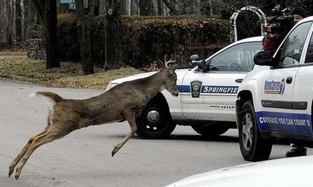 Восстание животных против машин (фото)