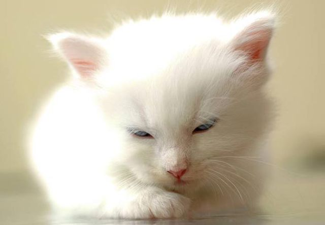 Почти «игрушечные» котята на сайте, куда выкладывают их милые фотографии