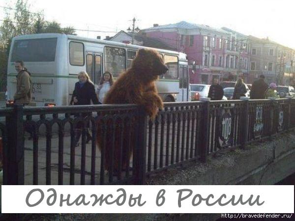 Где гуляют медведи в России?