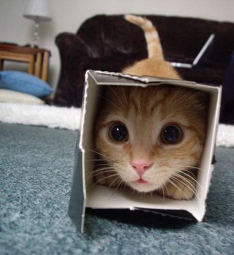 Подборка смешные картинки с животными: Дневник группы ...