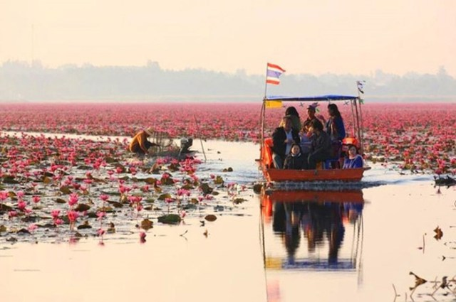 «Море красных лотосов»— очень красивое озеро в Таиланде