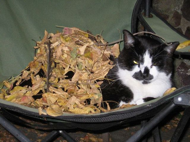 Странное происшествие, кот, котлета и осень