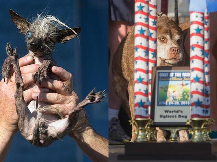 Самая уродливая собака, победитель конкурса 2015 года