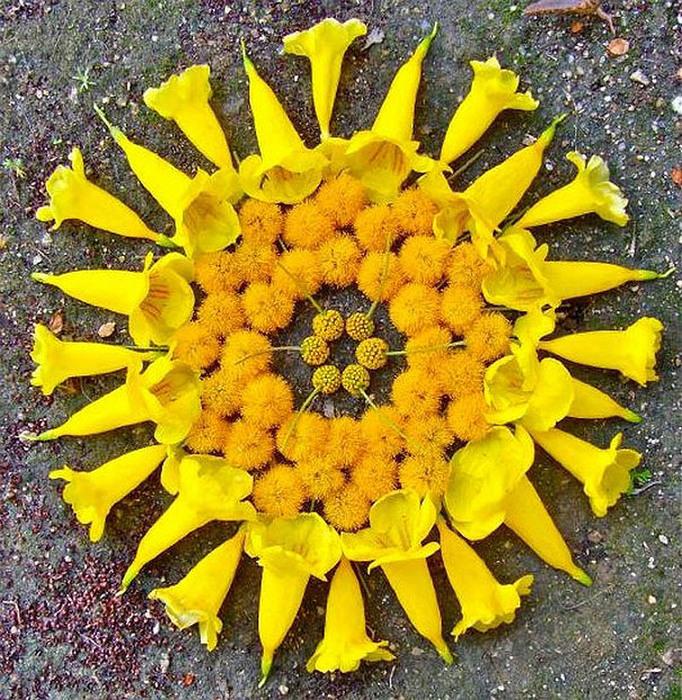 цветочные мандалы фото 1 (682x700, 275Kb)