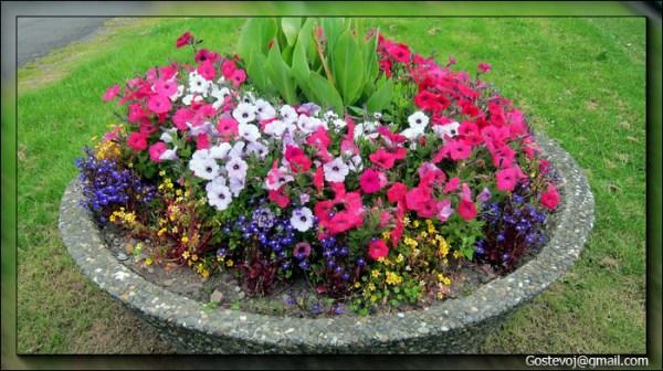 Цветочный фотоклипарт от Gostevoj Цветочные клумбы